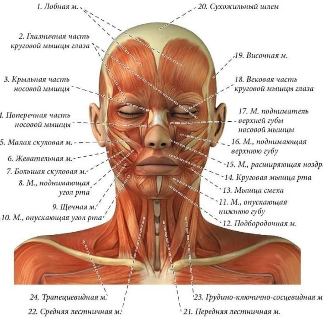 Физиологические причины старения лица и способы их замедления Фото-3
