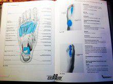 Филипп Рихтер, Эрик Хэпген. Триггерные точки и мышечные цепи в остеопатии. Фото 5