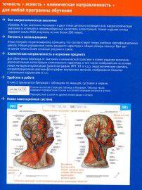 Sobotta. Атлас анатомии человека. Том 2: Туловище. Внутренние органы. Нижняя конечность. Фото 3